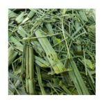 El Guapo -  Shave Grass Herbal Tea Bags Mexican Tea 0012354099227