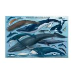 Eurographics -  Inc Whales And Dolphins Ages 12 And Up 0600000820006
