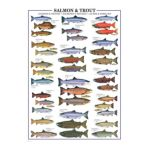 Eurographics -  Salmon And Trout Jigsaw Puzzle 0628136603119