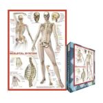 Eurographics -  Skeletal System Jigsaw Puzzle 0628136620147