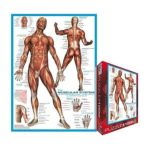 Eurographics -  Muscular System Jigsaw Puzzle 0628136620154