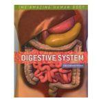 America's Choice - Digestive System Amazing Human Body 0754807197783  / UPC 754807197783