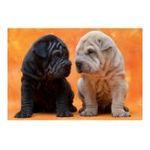 Educa Borras -  Puzzle 500 pièces petits chiens 8412668144637