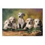 Educa Borras -  Puzzle 500 pièces petits labradors 8412668148024